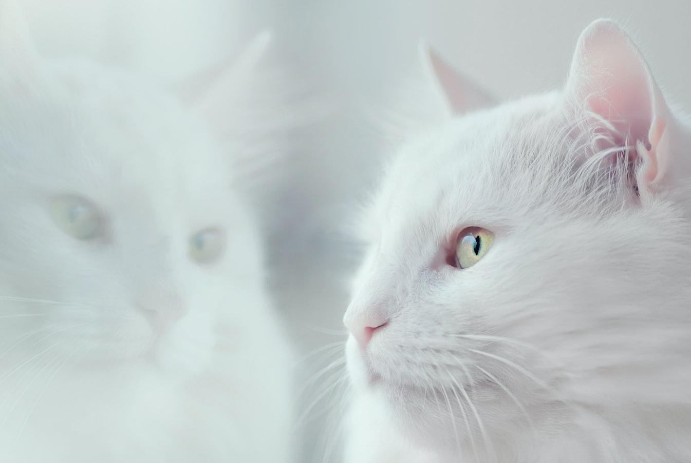 Słówka związane z kotami prowadzą mnie dziś do zbyt daleko idących wniosków. Ale kto wie, może to właśnie koci spisek przejęcia władzy nad światem? Stworzyć zestaw słówek, których powiązanie ze sobą doprowadzi człowieków do szaleństwa?
