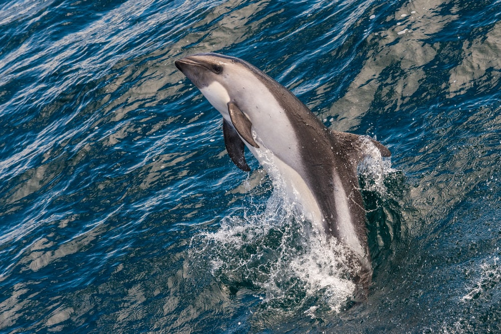 dolphin during daytime