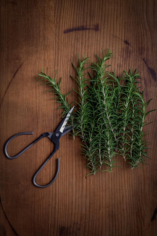 black scissor beside plant