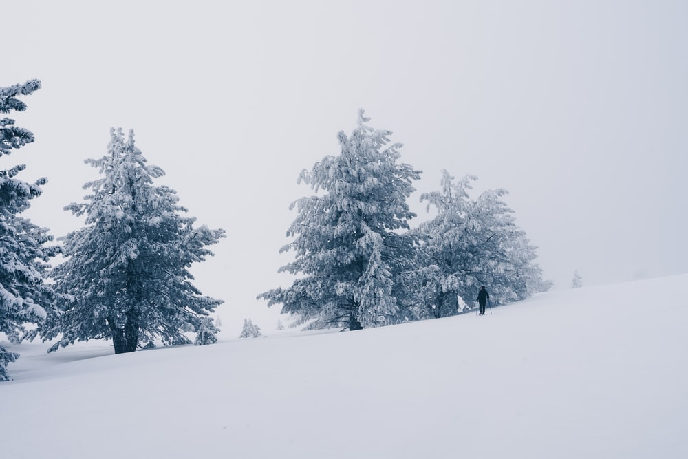 snow-covered green pine trees