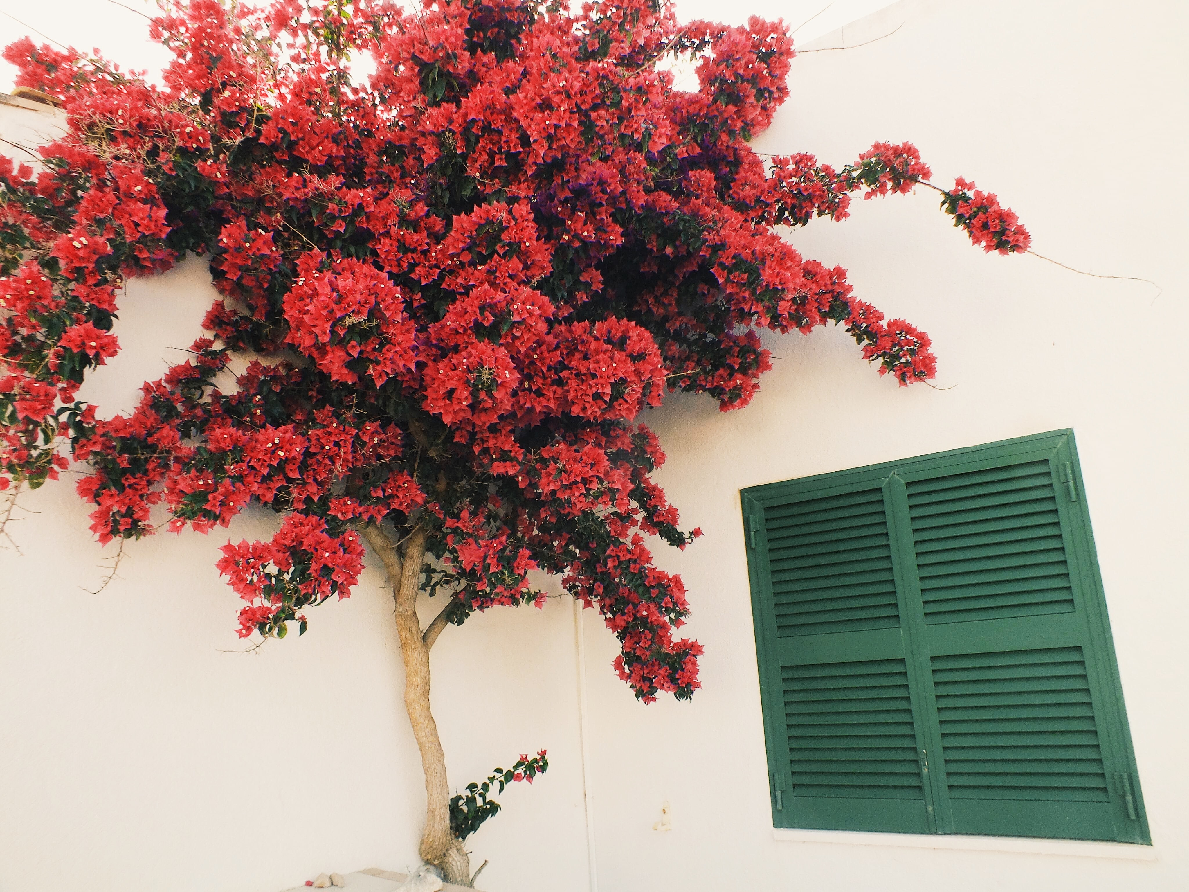 red tree beside white wall during daytime