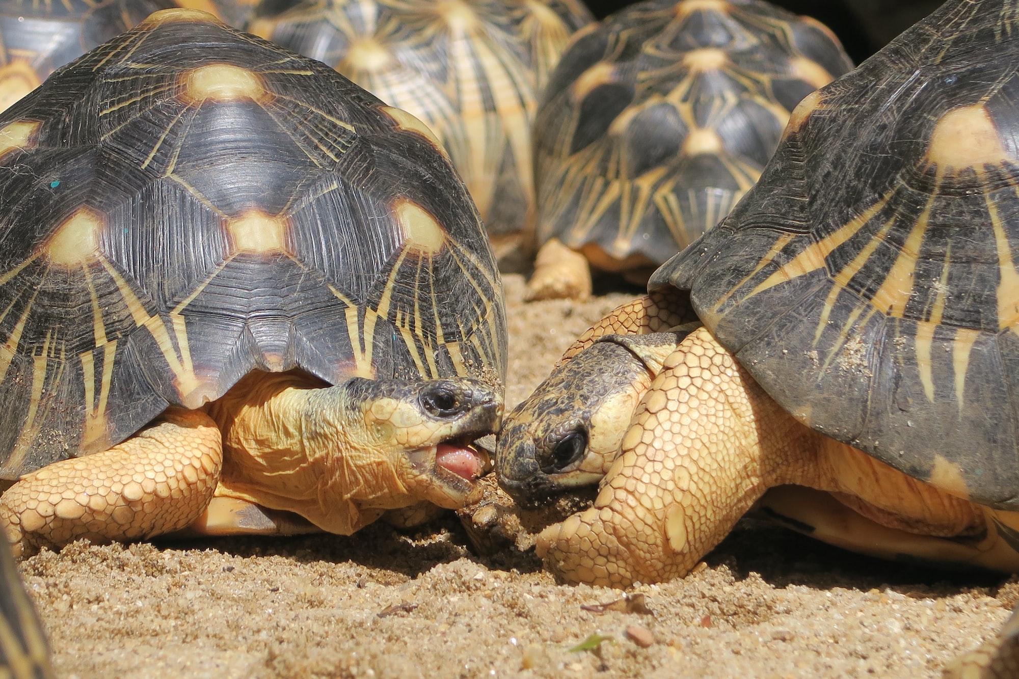 Trump, Zuckerberg & Dorsey: Turtles All the Way Down