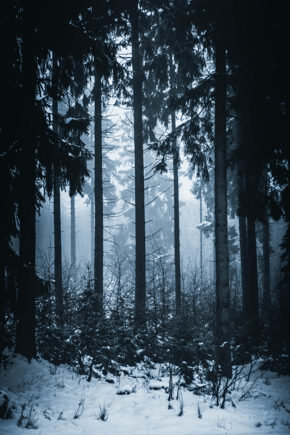 snowy woods with fogs
