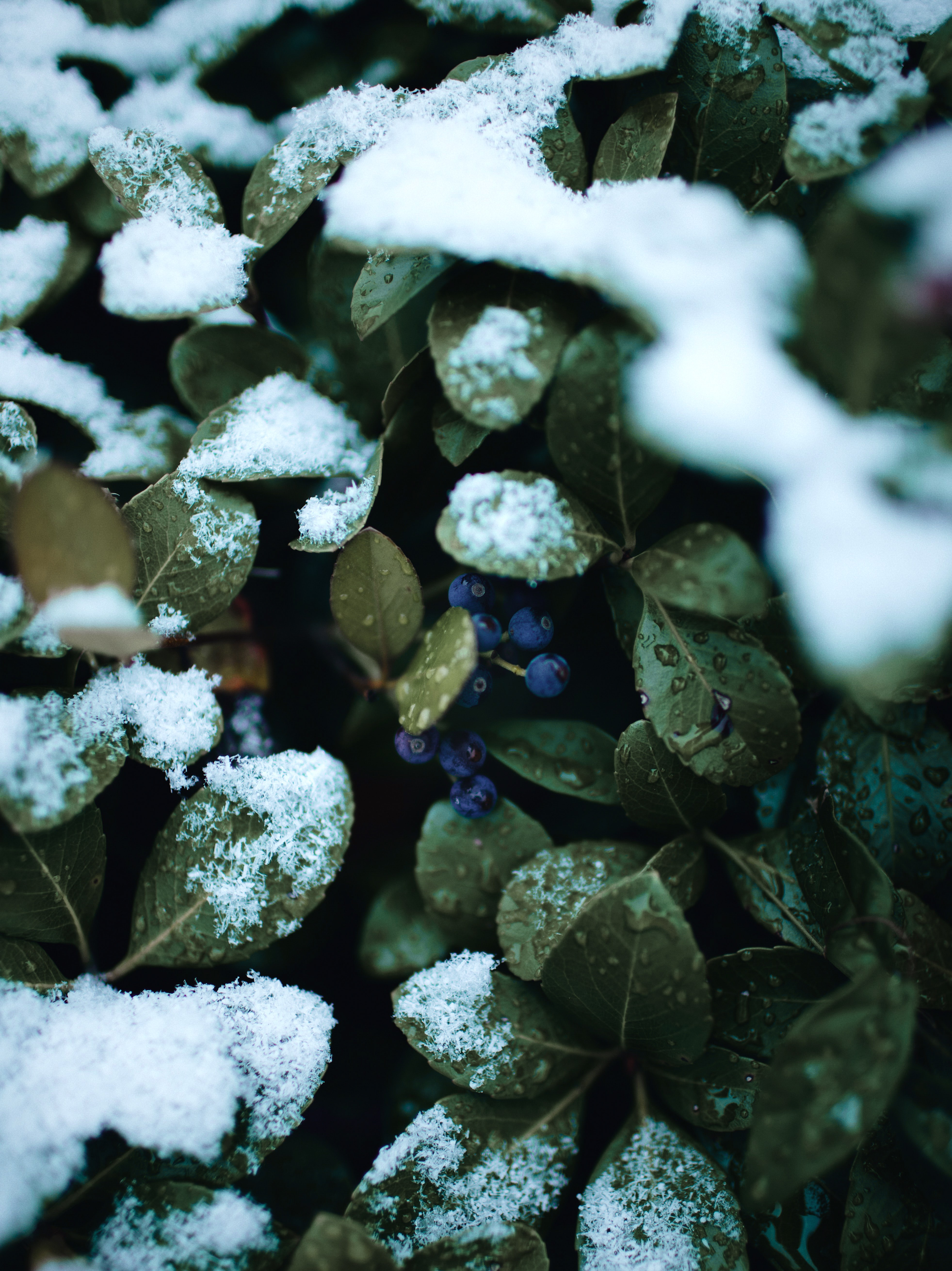 green-leafed plants covered with snow