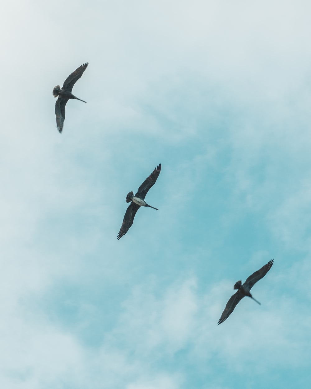 three bird flying on air during daytime
