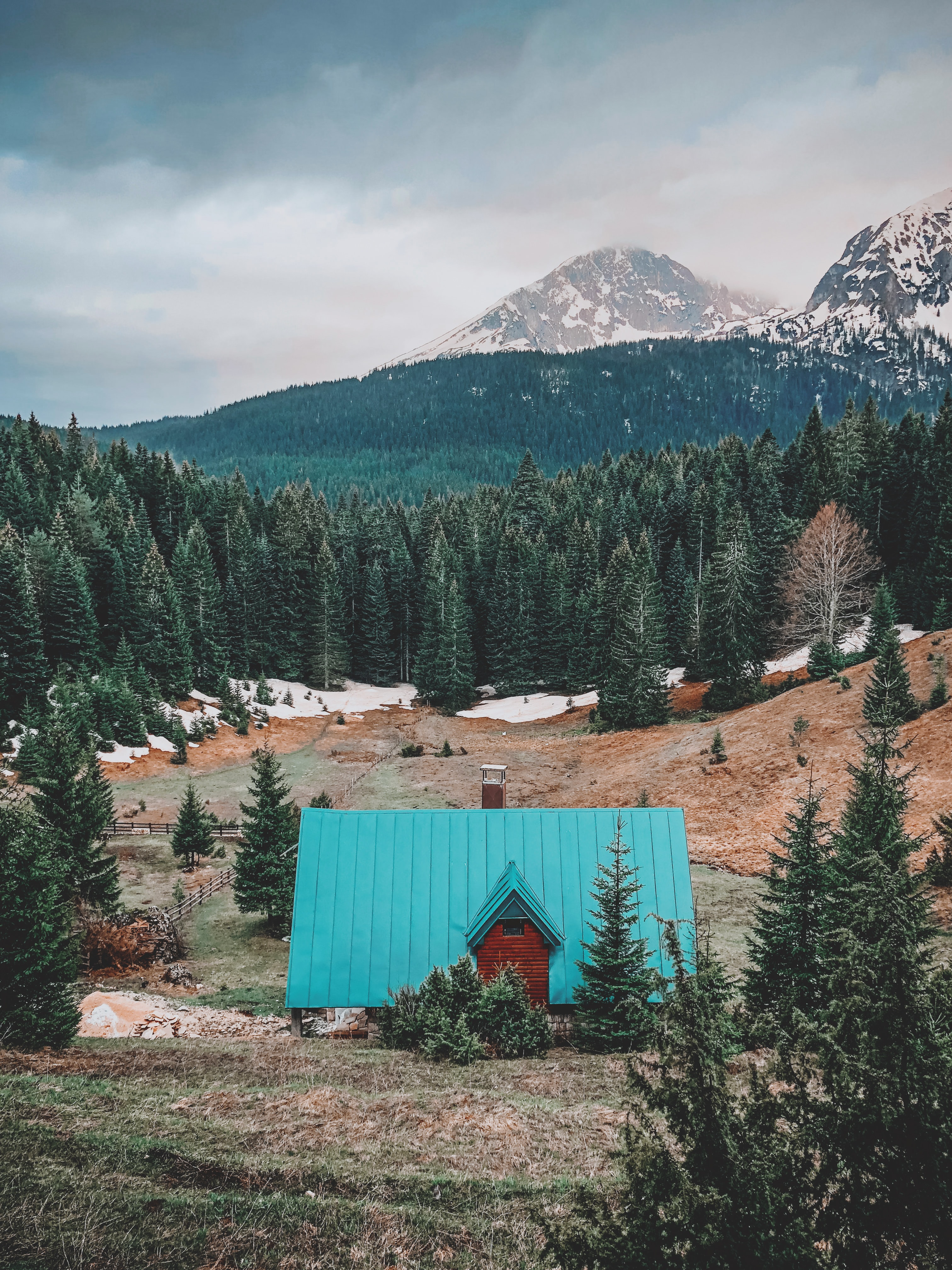 teal roof house surrounded by pine trees