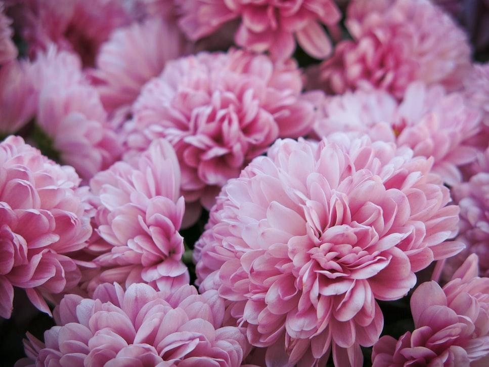 Planting Dahlias From Seeds | A Garden Season Guide