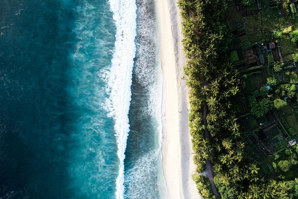 bird's eye view of seashore