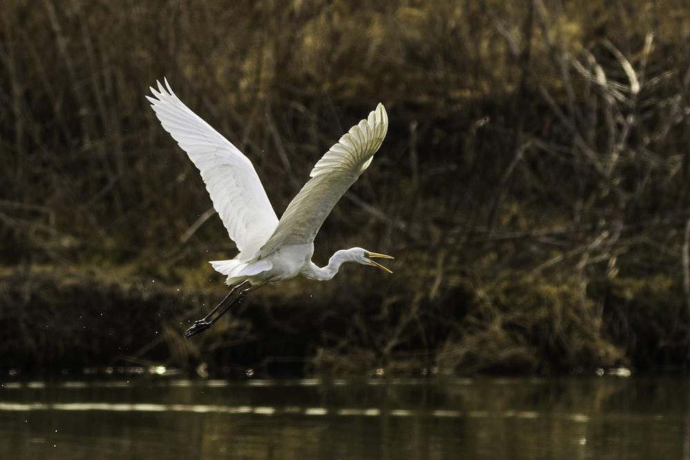 flying swan at daytime