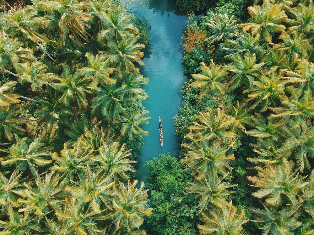 aerial view of boat at the middle of coconut trees