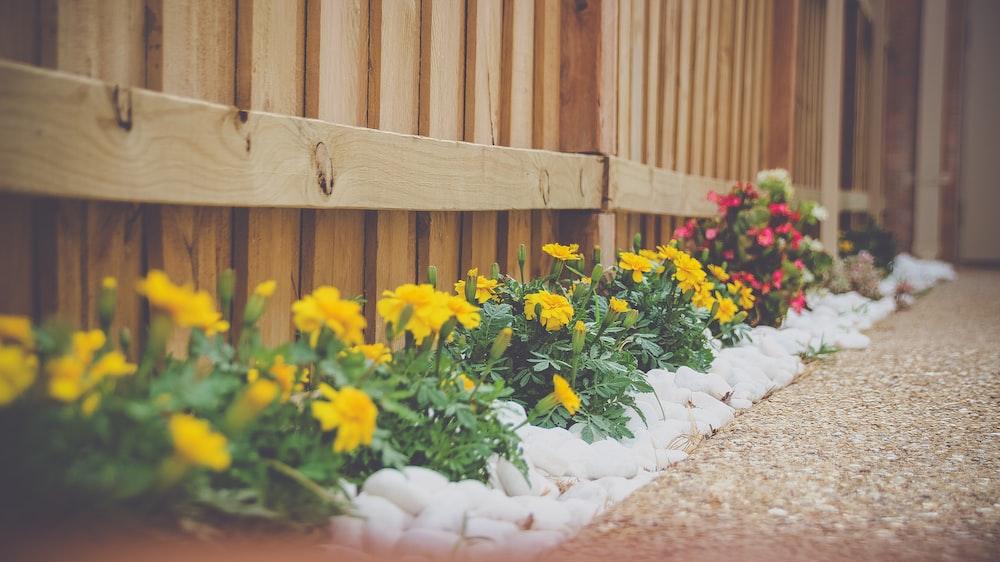 yellow petaled flower beside wooden fence