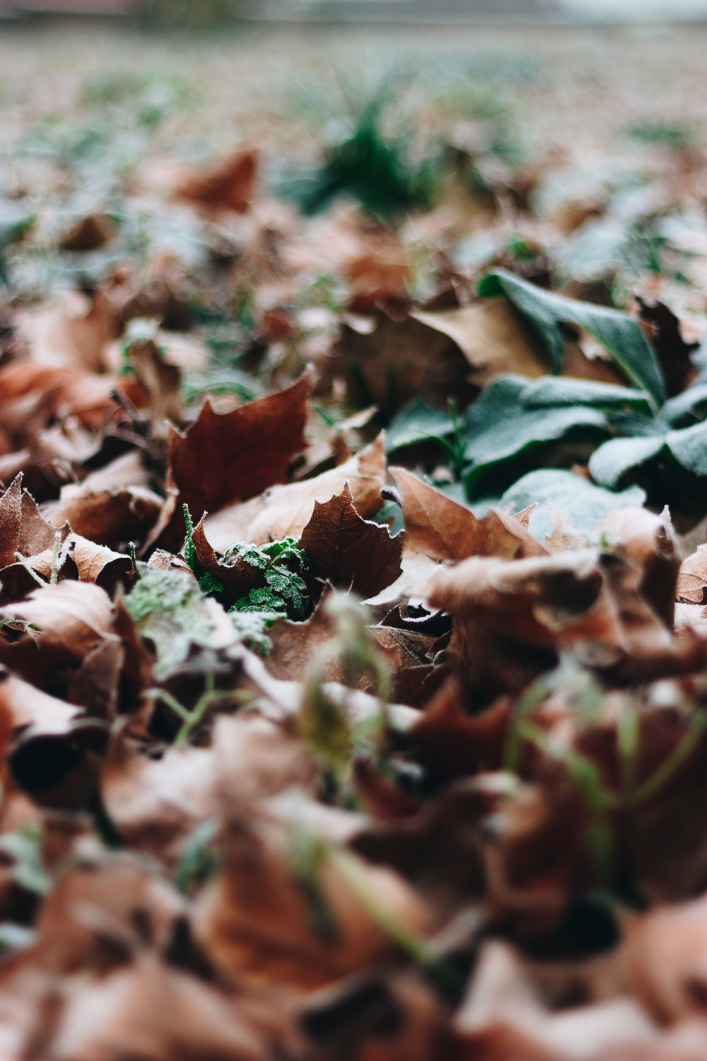 view of dried leaves on ground