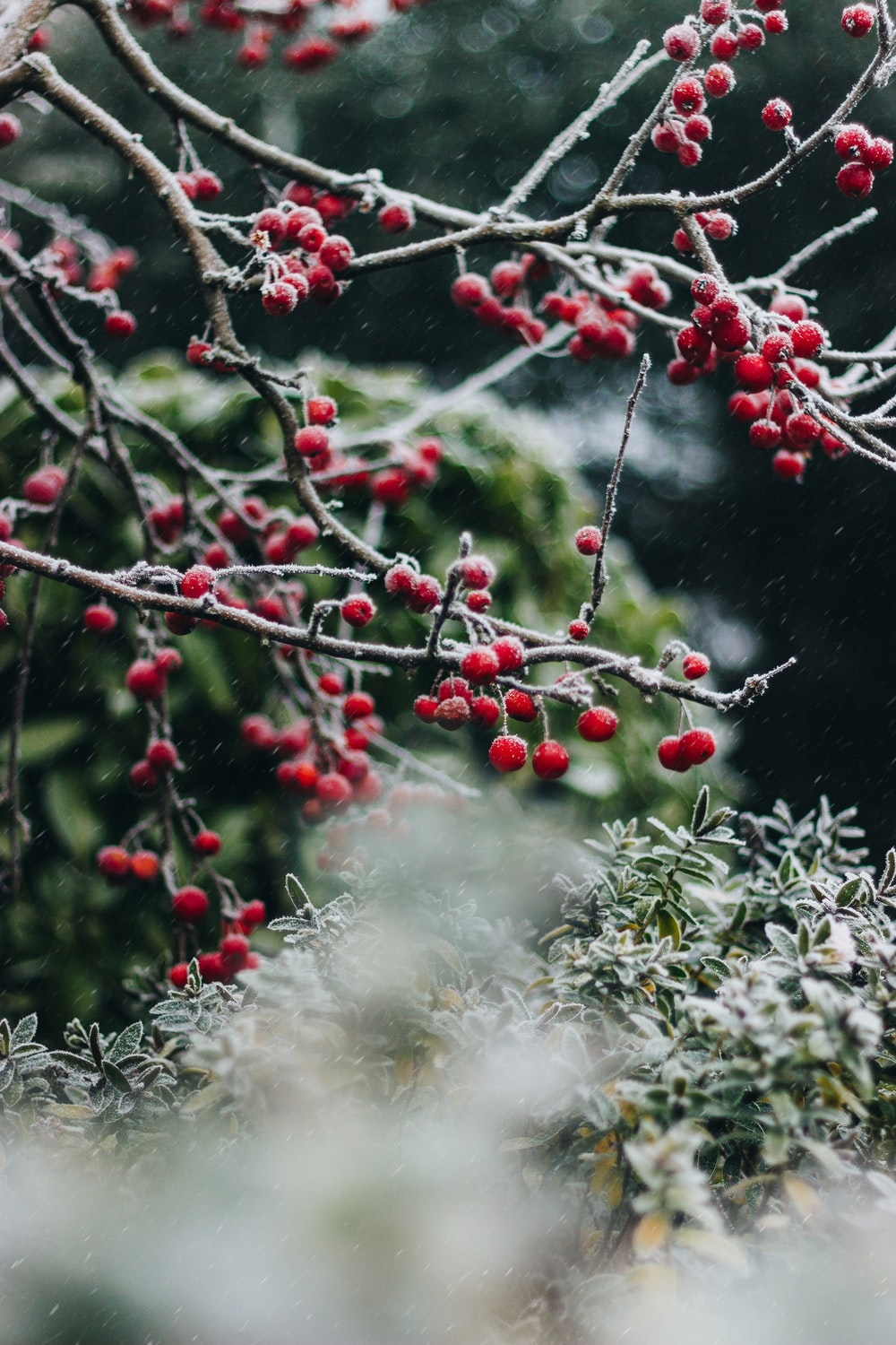 Christmas Scenes.Christmas Scenes 21 Best Free Christmas Holiday Plant