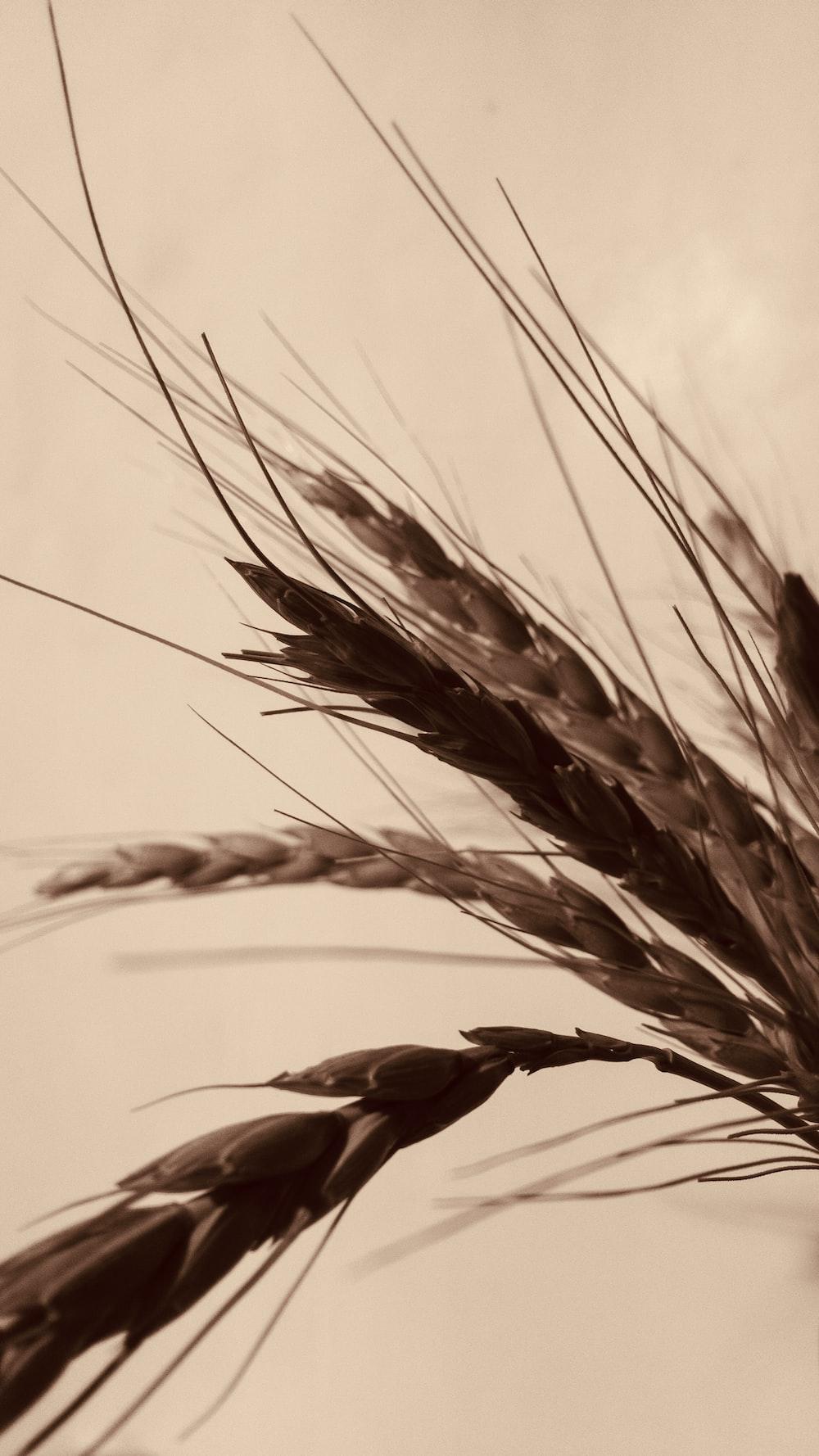 brown grain