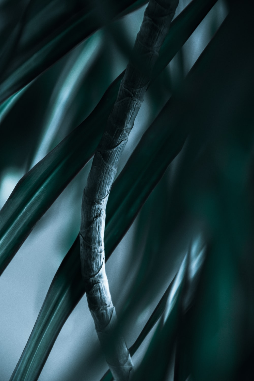 green linear-leafed plant on focus photography