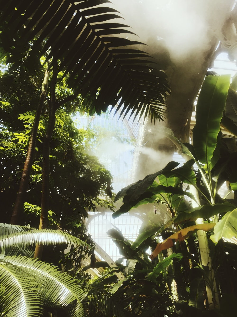 coconut tree and banana plants with sunlight passing through