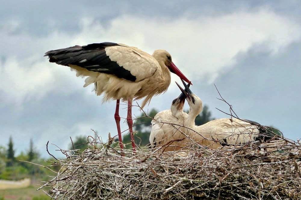 three white and black birds on nest during daytime