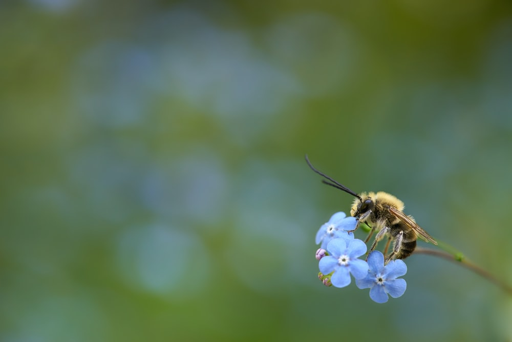 bee pollinating blue petaled flower during daytime