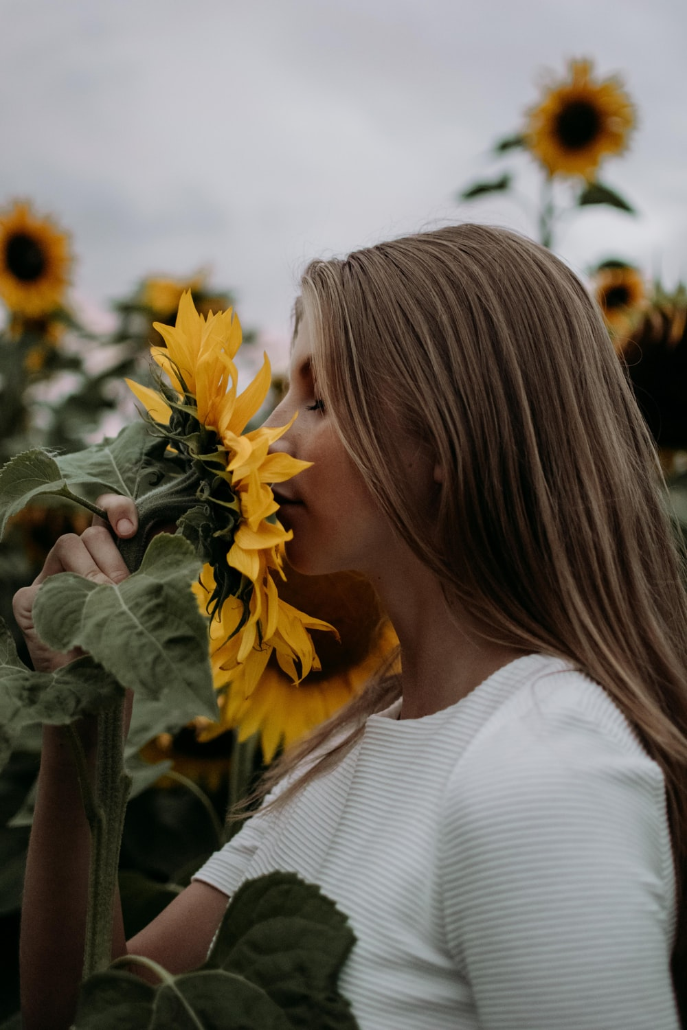 woman in white shirt sniffing sunflower in the middle of sunflower field