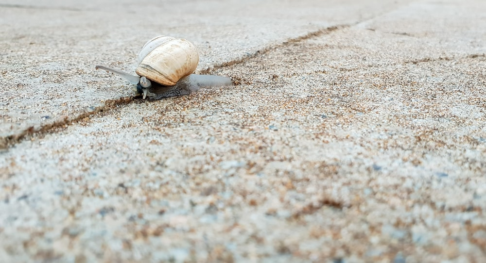 brown shell animal on focus photography