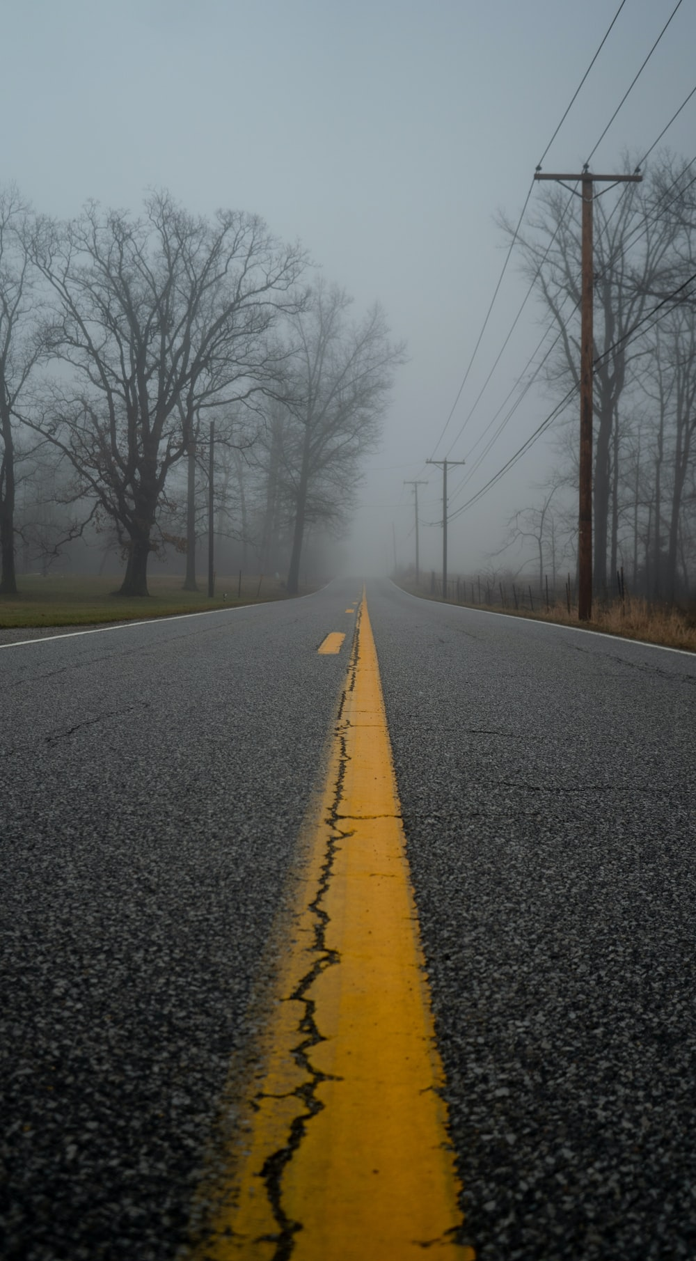 asphalt road between trees during daytime