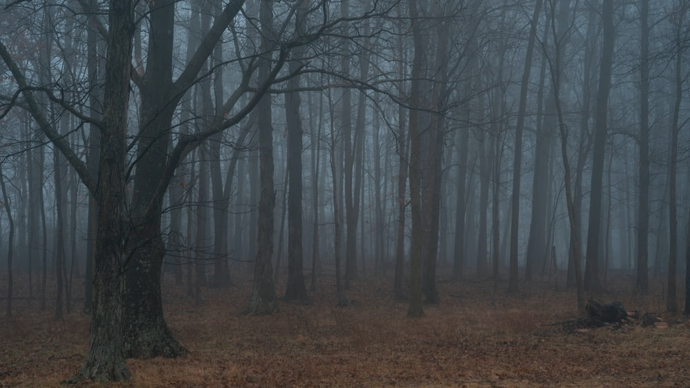 bare trees covered with fogs