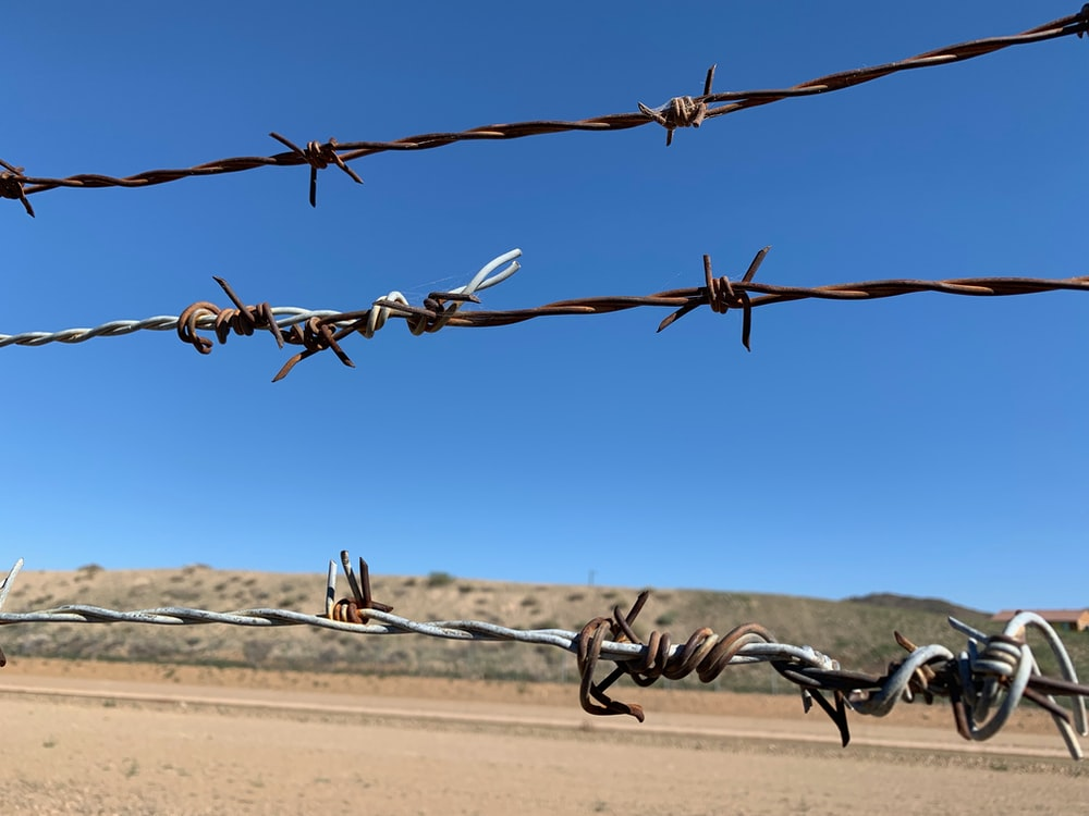 barb wire in close-up photo