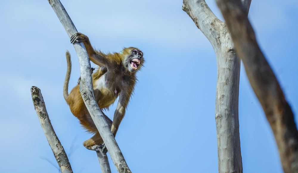 brown monkey holding on wood