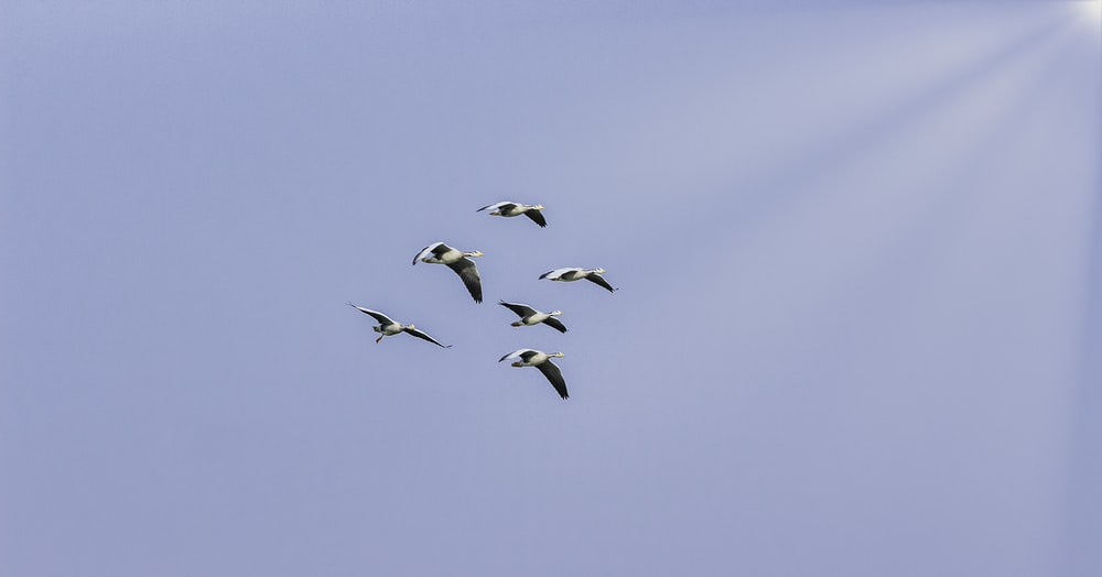 five flying birds on sky during daytime
