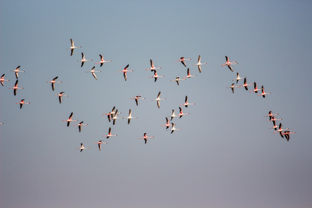 birds flying in formation during daytime