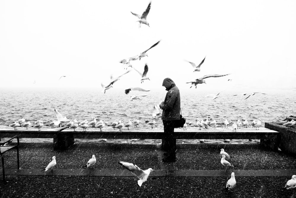 grayscale photo of person in gray hoodie surrounded by flying birds