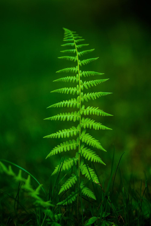 selective focus fern plant