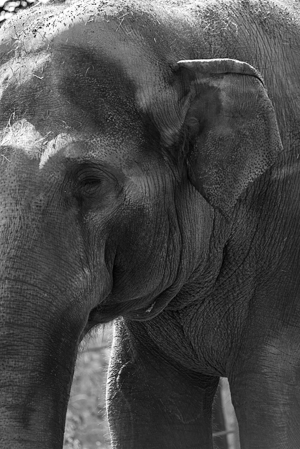 closeup photo of elephant