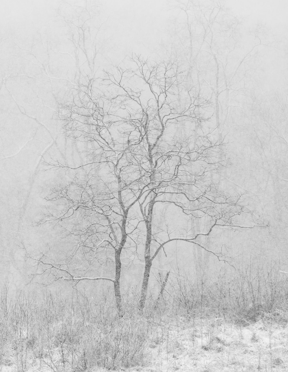 snow covered tree at daytime