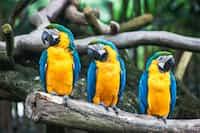 Amazing World of Birds  commalympics stories