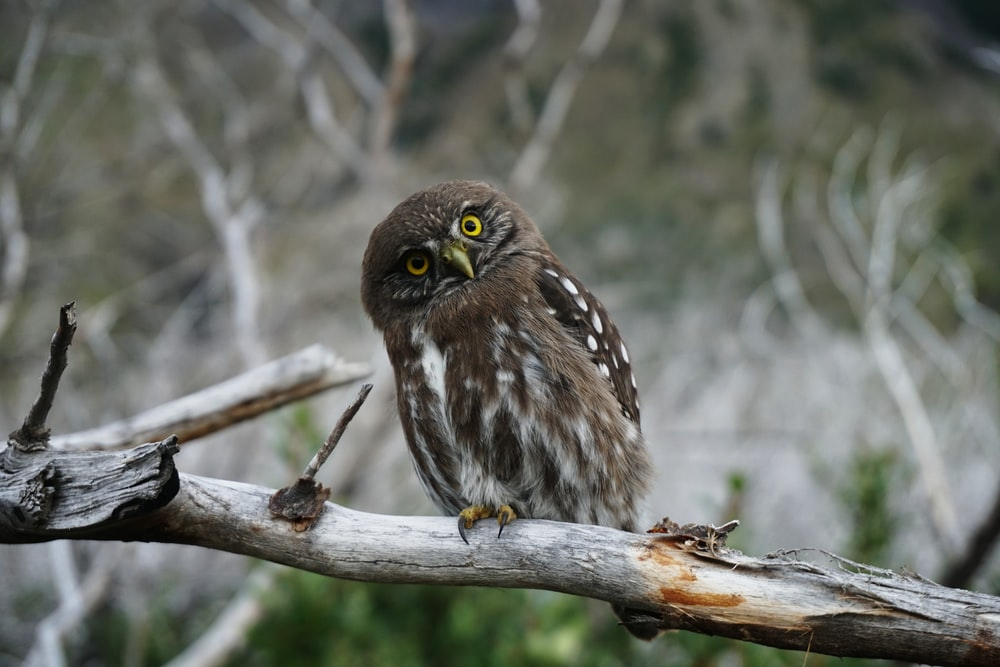 gray owl perching on wooden branch during daytime