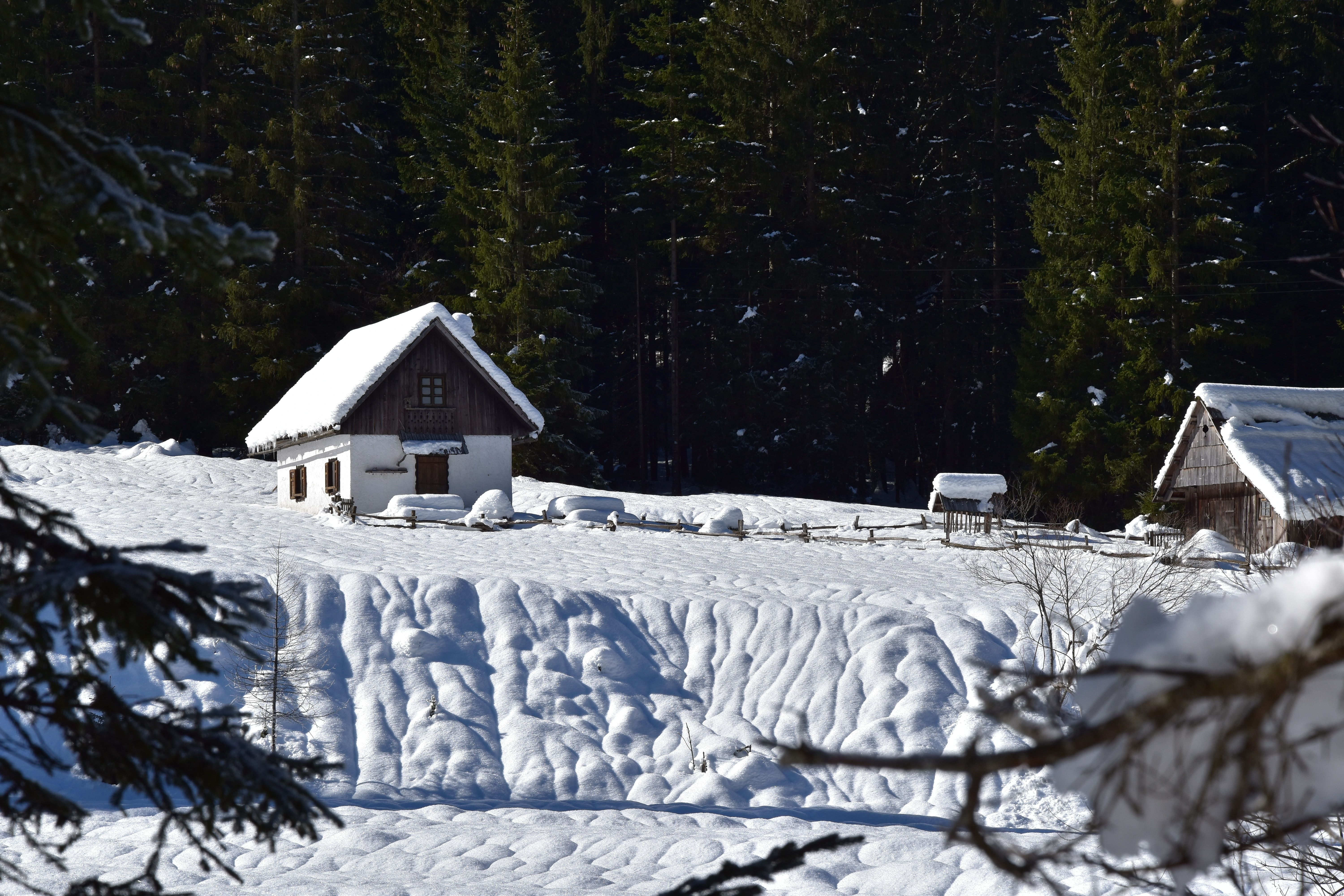 houses on snow covered ground near trees at daytime