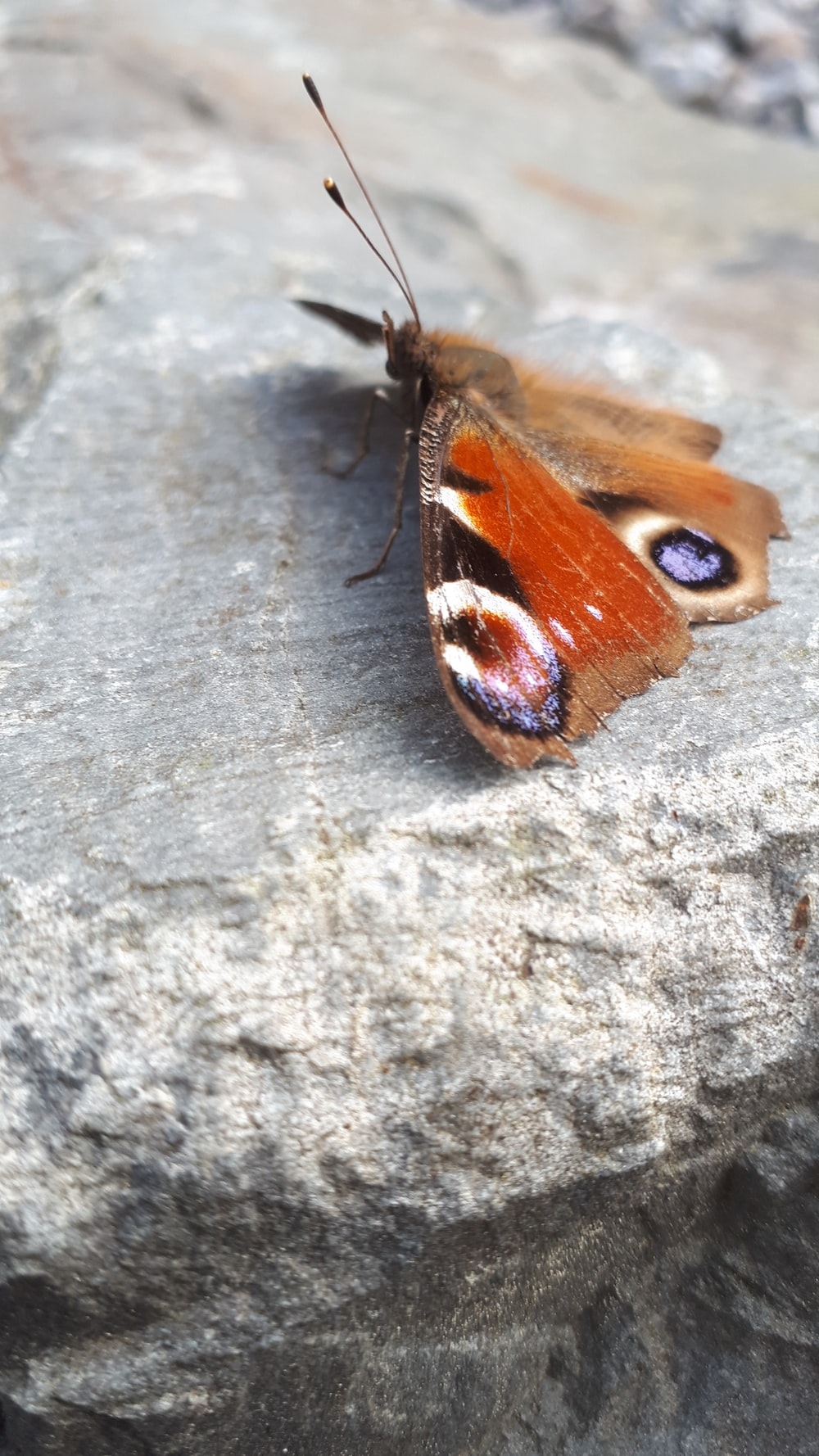 brown moth on gray rock