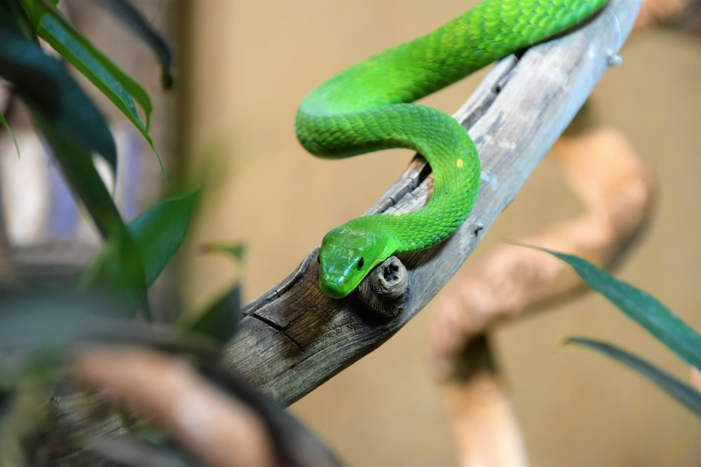 selective focus photography of green snake on twig