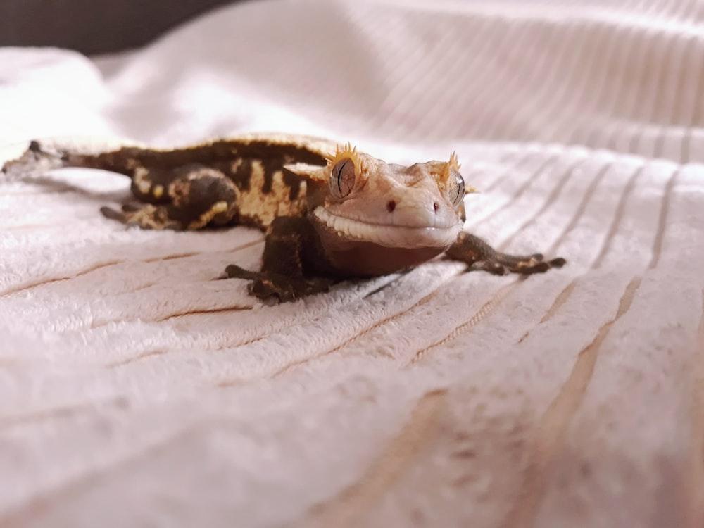 white and black gecko on white textile