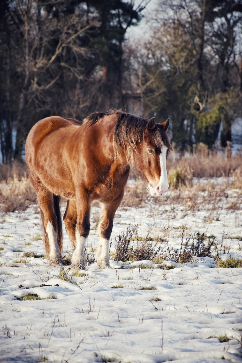 brown and white horse on snowy field