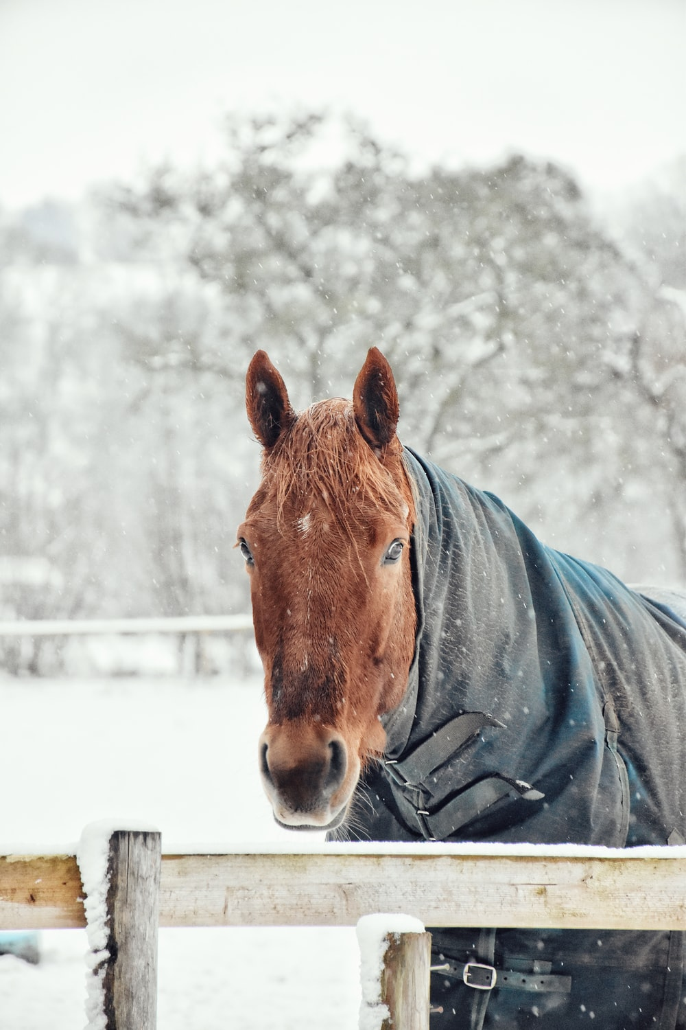 brown horse standing beside beige fence during winter