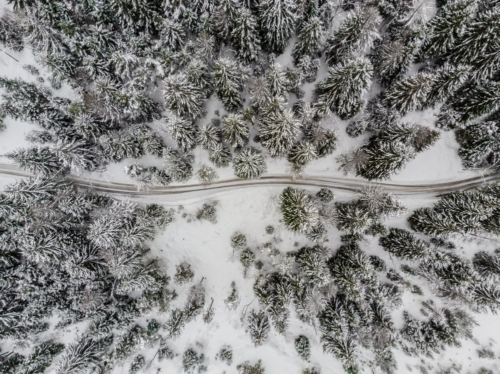road traversing in the middle of a snow covered forest