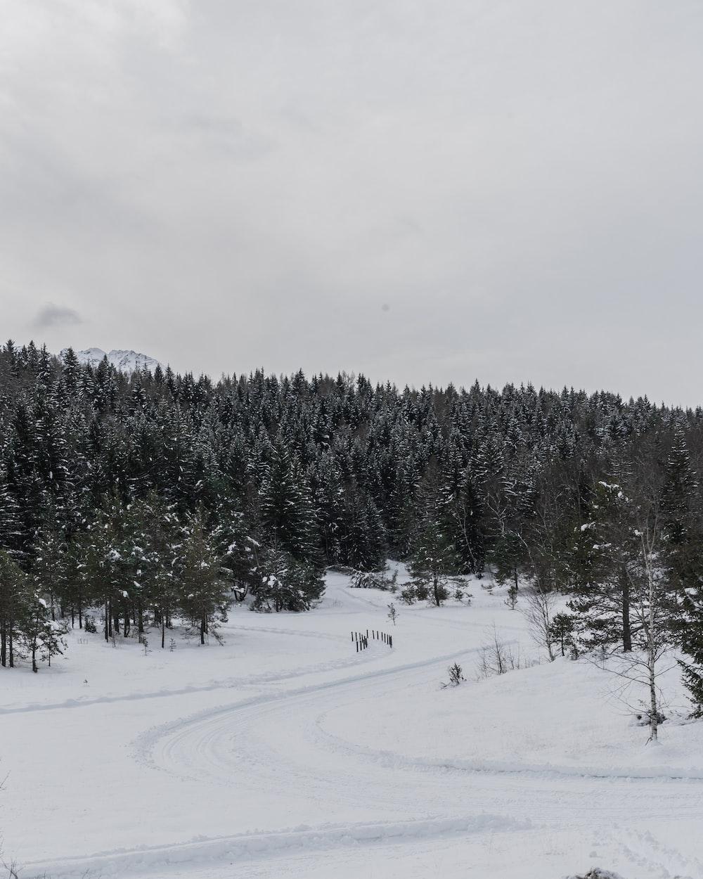 green pine trees on snow mountain
