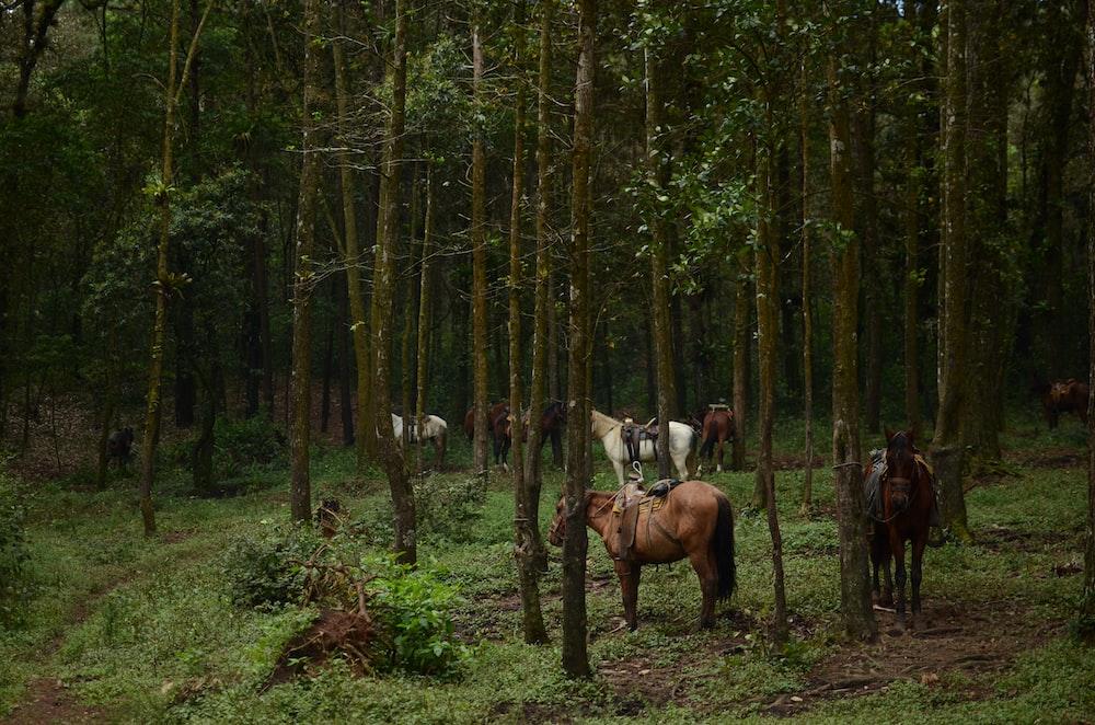 horses tied to trees photos