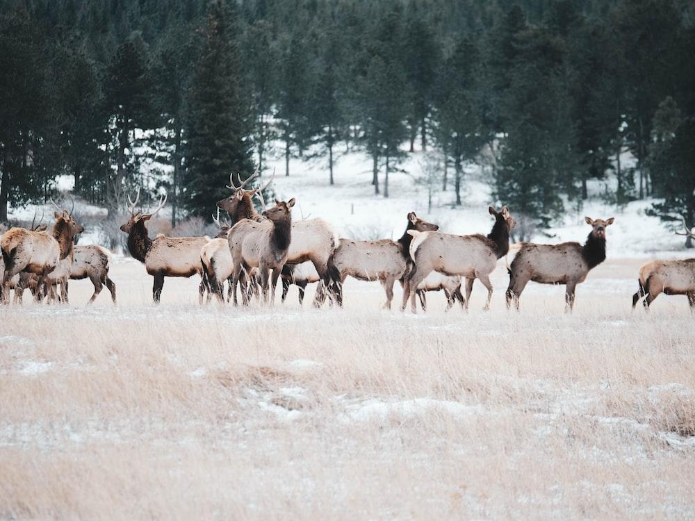 herd of deer outdoor during daytime