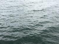 sea closeup photography