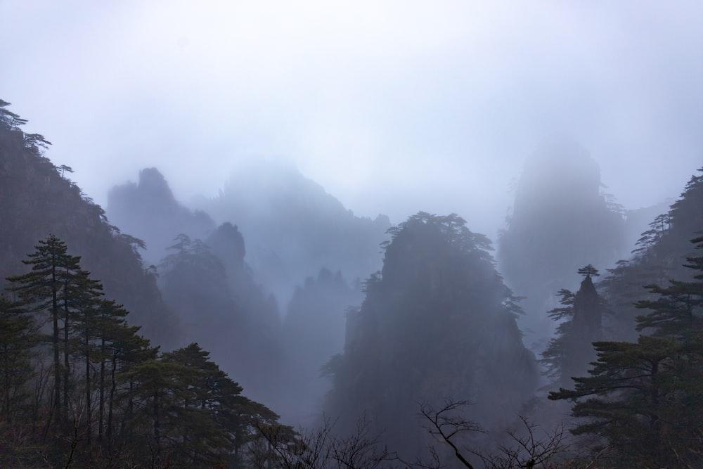 tree under white cloud during daytime