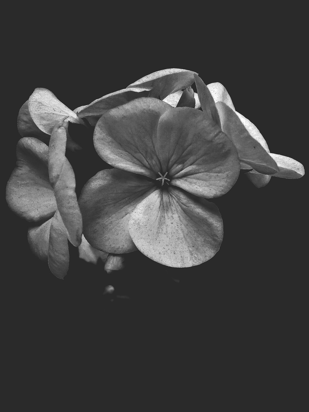 grayscale photo of orchid