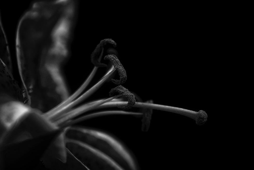 close up photography of flower pistil